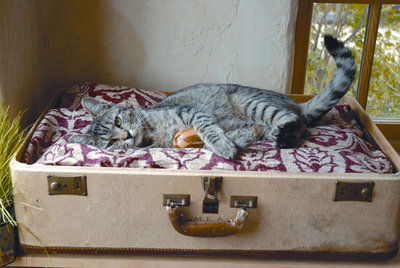 2 Responses To Make Your Own Pet Bed
