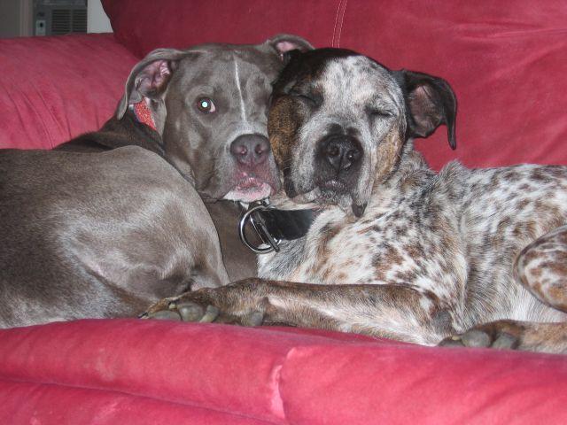dogs-july-08-024.jpg