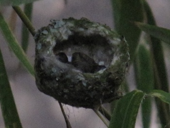 Wed July 15 - two babies at a hard angle to see