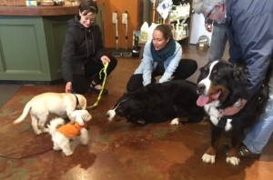 it's very nice when big dogs get low to meet puppies. Hold the adult dog in one place on a leash and allow the puppy to approach and retreat as they gain confidence.